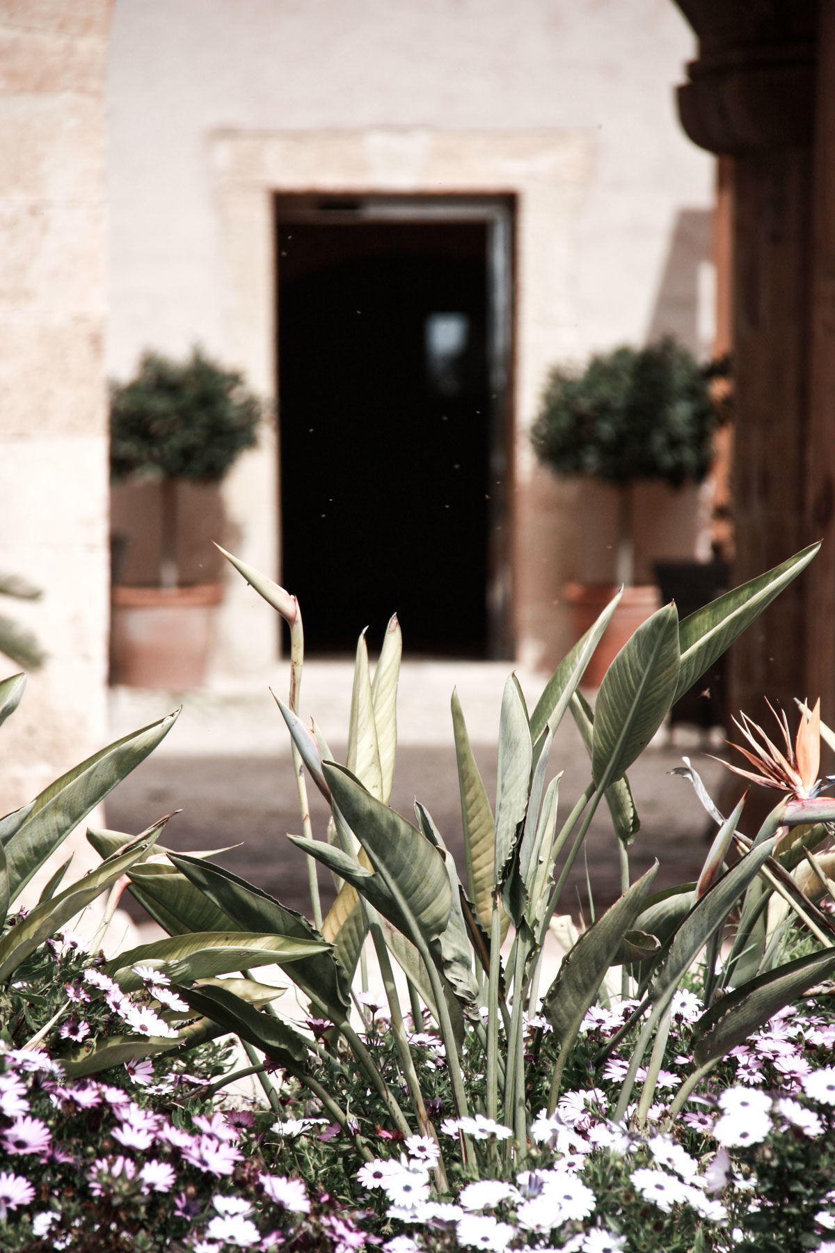 Zeitgeist Living Hotel Hilton Sa Torre Mallorca