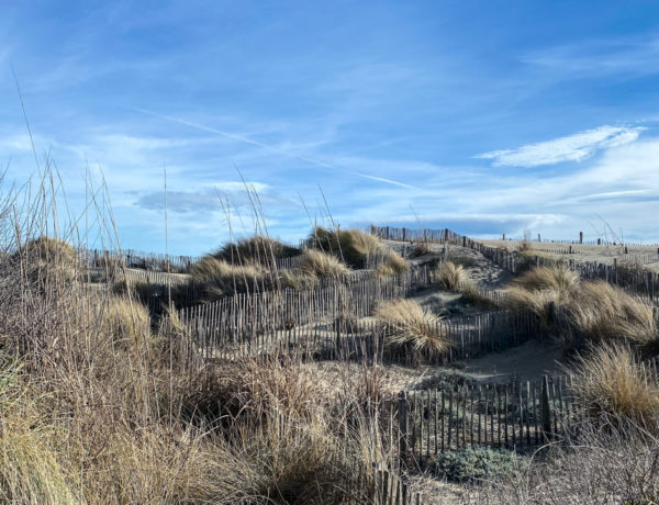 Zeitgeist-Living-Carmague-Beach-Day