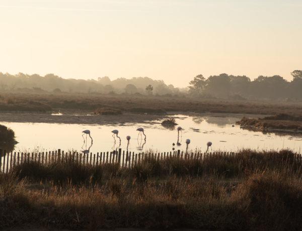 Zeitgeist-Living-Early-Morning-Flamingos
